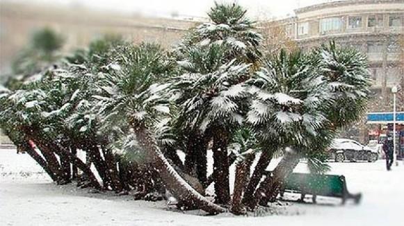 Баку зимой 4